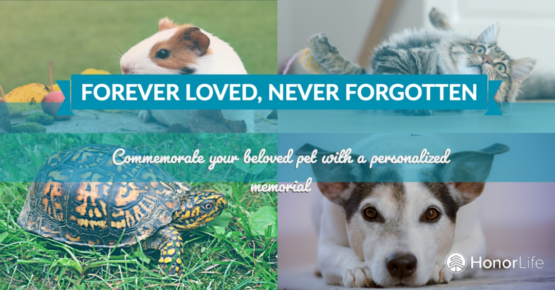 Pet Memorials: Remembering Your Animal Friend